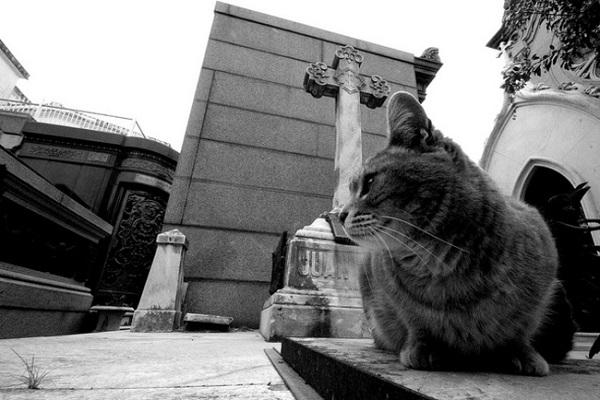 kedi-mezarlik