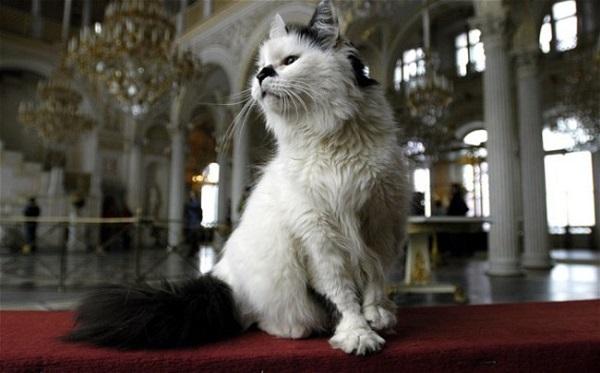 kedi-muze