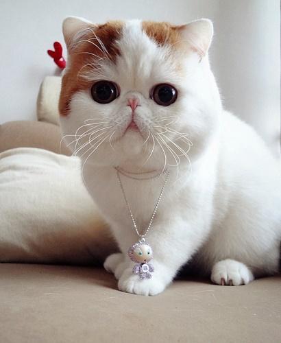 kedi-sevimli