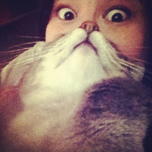 kediler-instagram