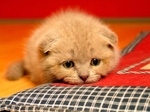 mutsuz-kedi