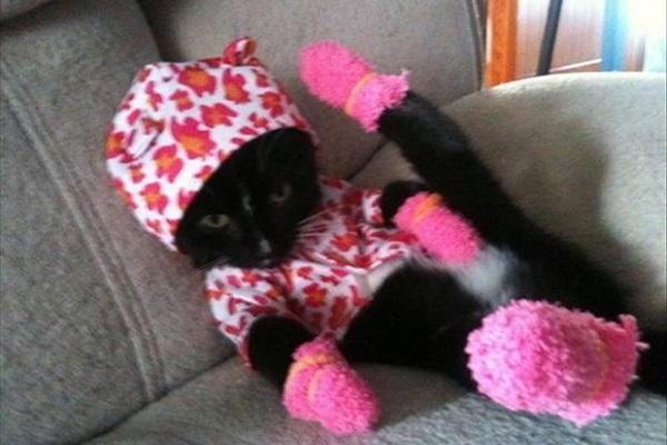 sirin kedi