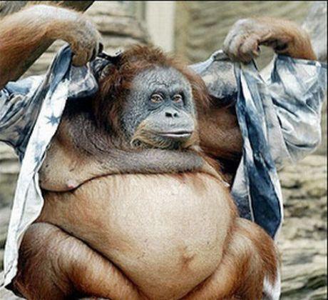 sisko maymun