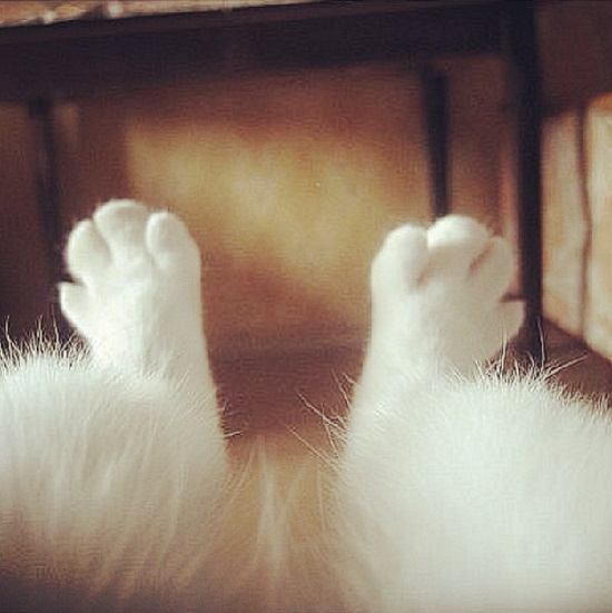 tatli kedi