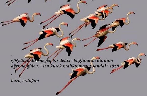5-flamingolar