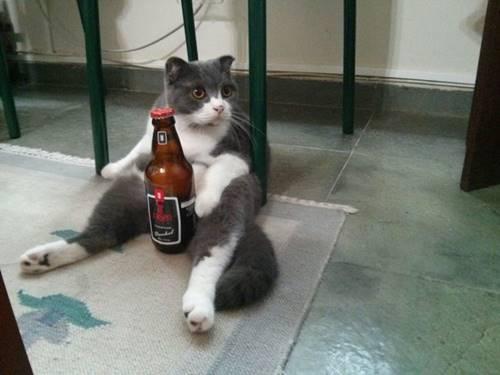 oturan-kediler-024