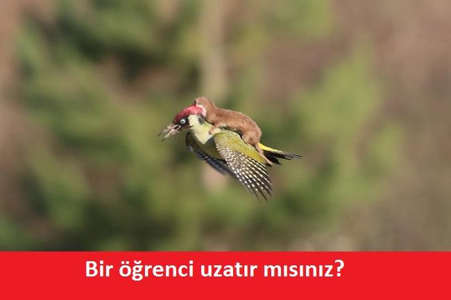 agackakan5