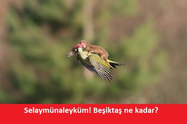 agackakan6