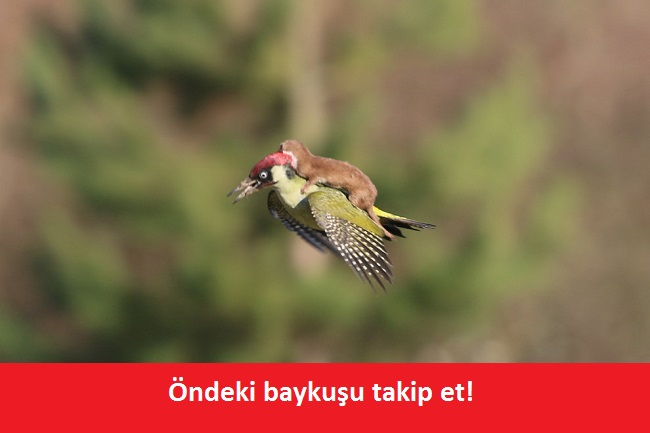 agackakan9