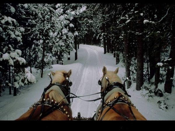 karda atlar