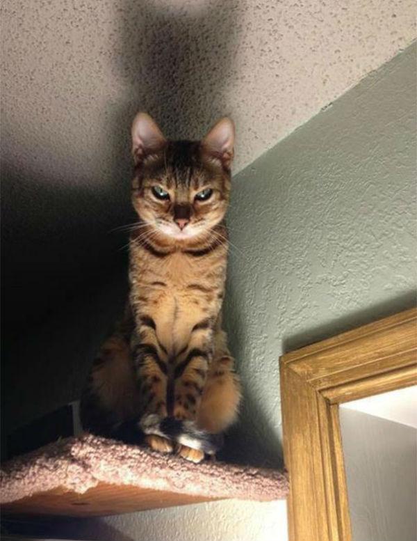 kedi17