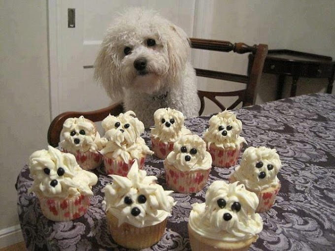 kopek-cupcake-komik