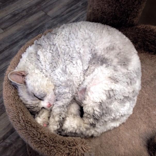koyun-kedi-albert-uyku