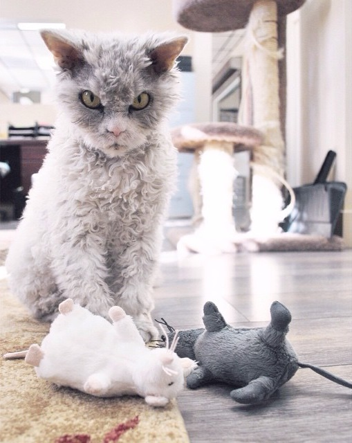 koyun-kedi-fareler