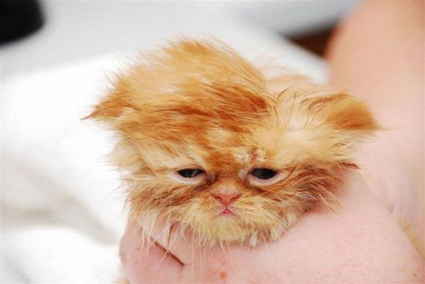 uykucu-kedi-turuncu