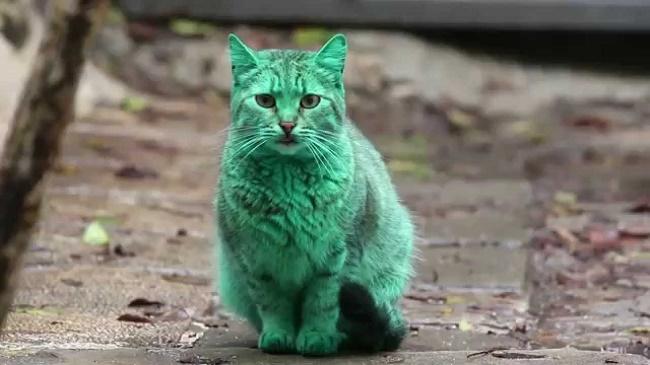 yesil-kedi-