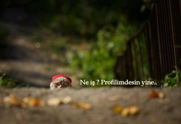 ne is profilimdesin yine