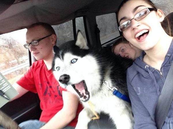 selfie-huski