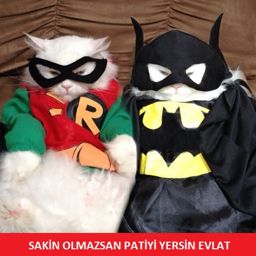 super-kedi-batman