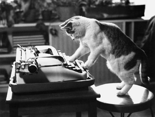 yazar-kedi