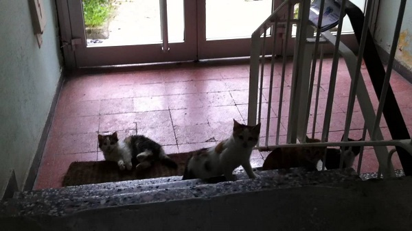 apartmna-kedi-sukufe