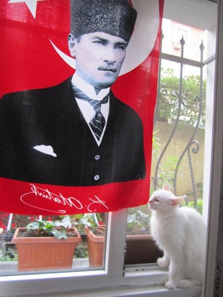 ataturk-kedi-2