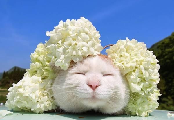 aymutlu-uyuyan-kedi10