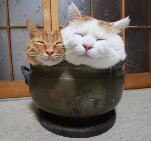 aymutlu-uyuyan-kedi11