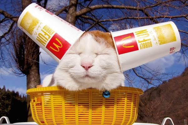 aymutlu-uyuyan-kedi12