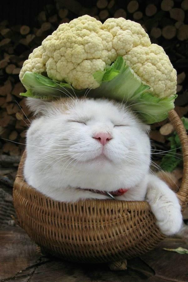 aymutlu-uyuyan-kedi13