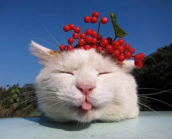 aymutlu-uyuyan-kedi14