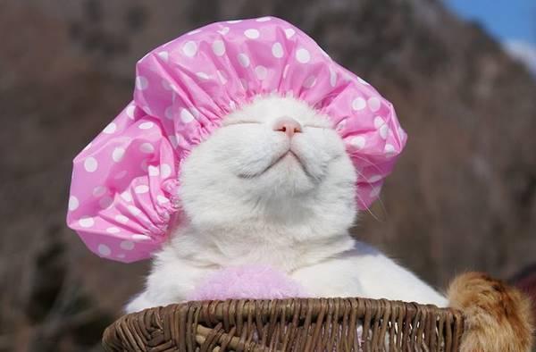 aymutlu-uyuyan-kedi3