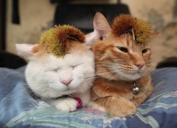 aymutlu-uyuyan-kedi5