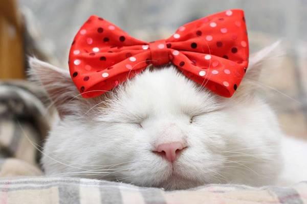 aymutlu-uyuyan-kedi6