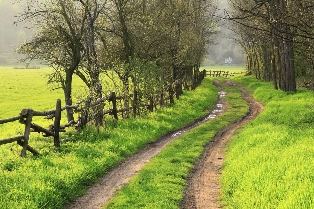 beautiful-natural-path