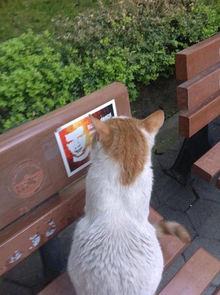 deniz-gezmis-kedi