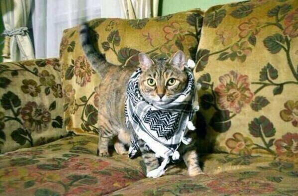 hdpli-kedi