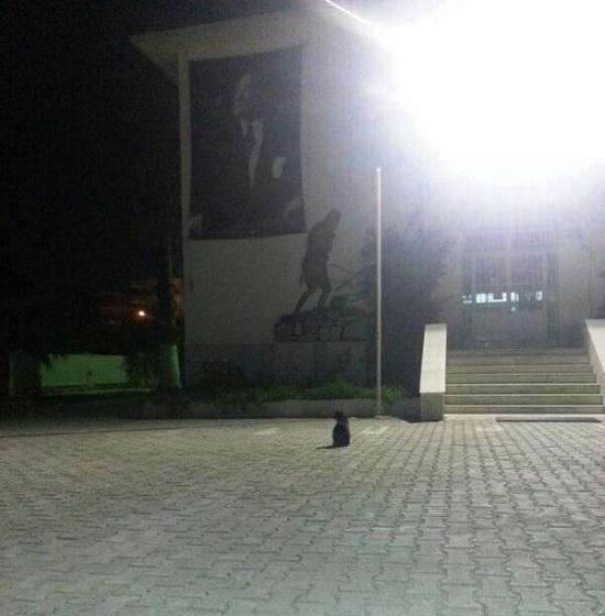 kedi-ataturk-heykel