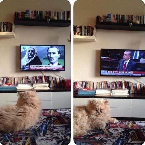 kedi-ataturk