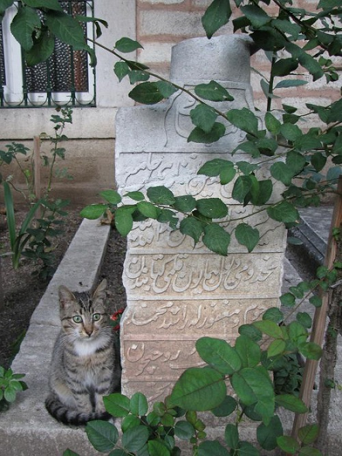 osmanlici-kedi