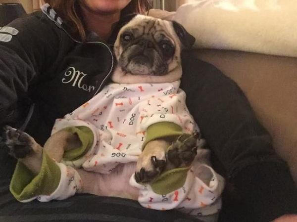 pijama10