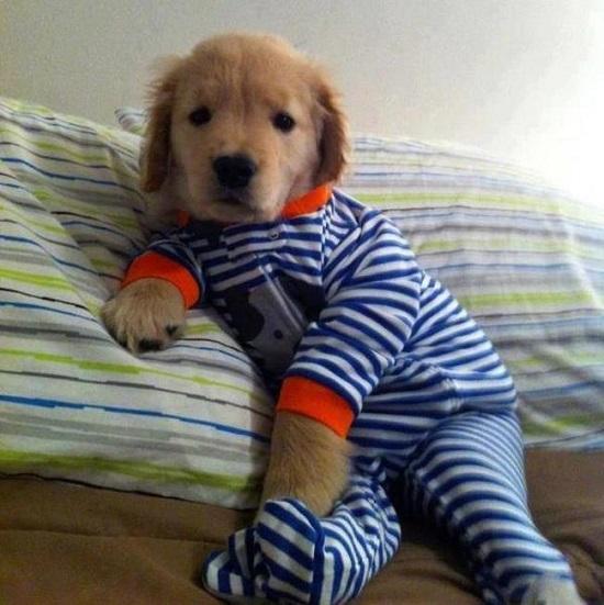 pijama16