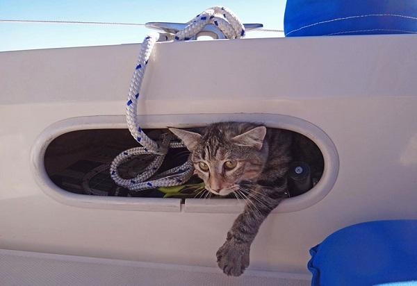 couple-sells-everything-travels-world-cat-matt-jessica-johnson-3