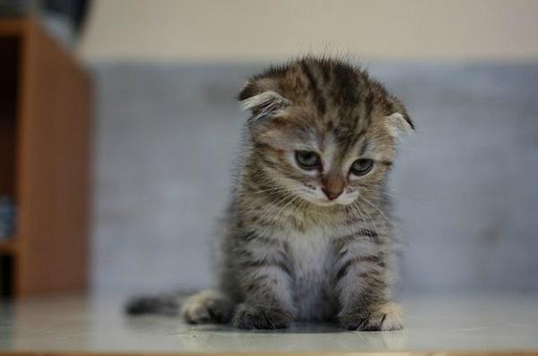 kedi-uzgun-yazik