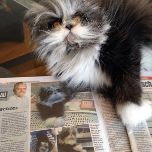 kurt-kedi-gazete