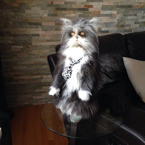 kurt-kedi-patron