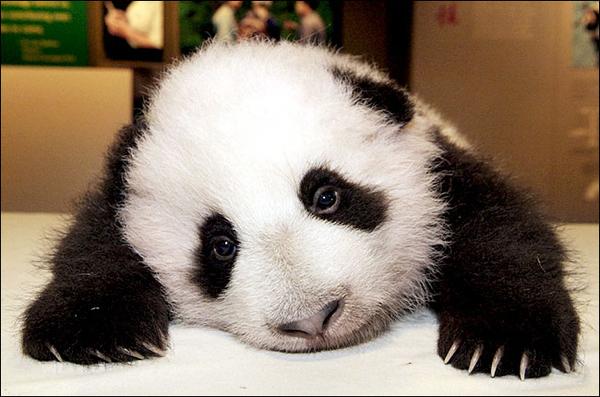 panda-uzgun-ss