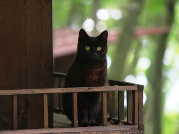 samsunkedi-kasabasi-kedi