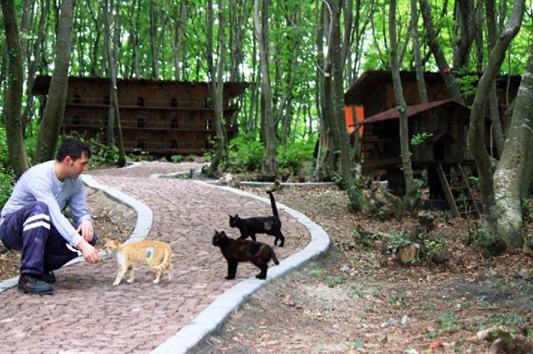samsunkedi-kasabasi-kediler