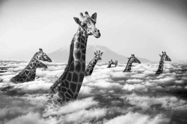 thomas-subtil-photography-animals-surreal-2